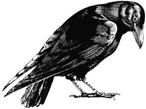 0039 Crow_REVERSED