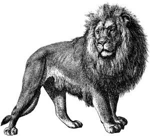 MB_00195_Lion
