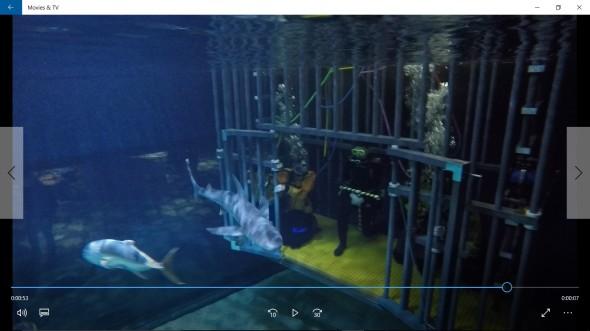 Shark Dive 2