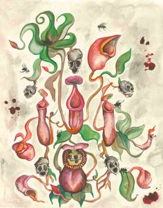 Art for Pitcher Plant Cover